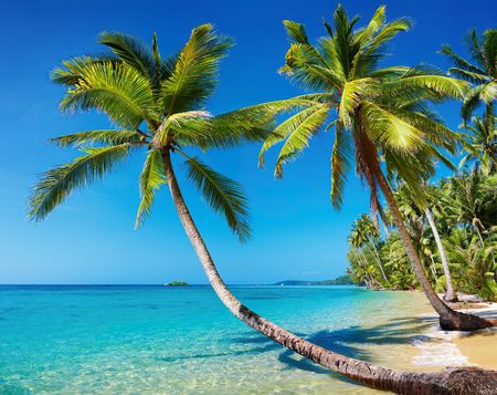 beach palm: Tropical beach with palms, Kood island, Thailand