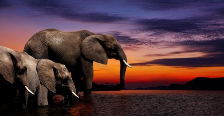 Elephants at watering in african savanna