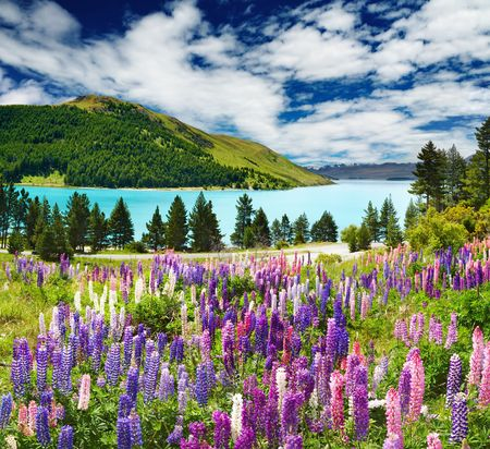 Landschaft mit See und Blumen, Neuseeland Standard-Bild