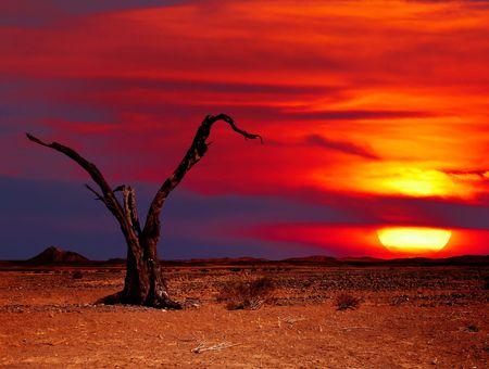 Desert landscape with dead tree at sunset