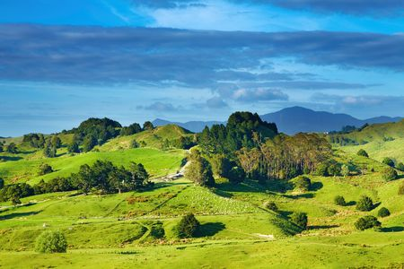 copse: Landscape with green hills and blue sky, New Zealand Stock Photo