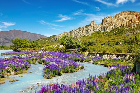 river bank: Landscape with colorful flowers, Clay Cliffs, New Zealand  Stock Photo