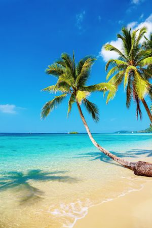 Tropical beach with palms, Kood island, Thailand Stock Photo - 8020046