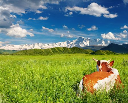Landscape with snowy mountains, green field and lying cow Stock Photo - 8280575