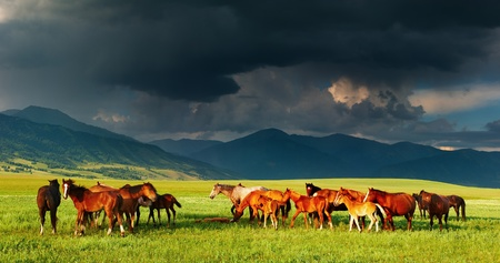 pastoral scenery: Mountain landscape with grazing horses and storm clouds