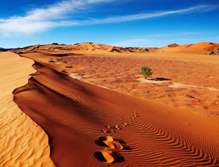 Single tree in Sahara Desert, Algeria photo