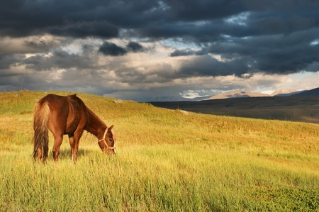 sunset with field: Grazing horse