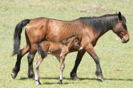 Mare and foal Stock Photo - 9025539