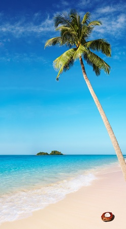 Tropical beach with palm tree and azure water photo