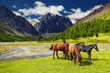 Mountain landscape with grazing horses 写真素材