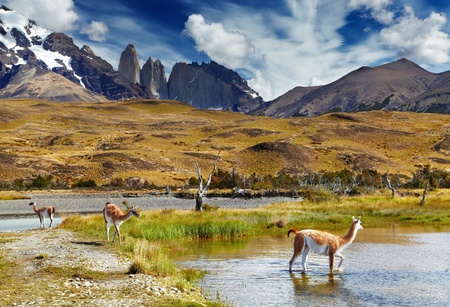 paine: Guanaco in Torres del Paine National Park, Patagonia, Chile  Stock Photo