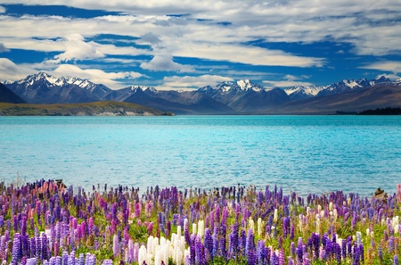 Lake Tekapo, South Island, New Zealand  photo