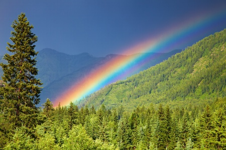 woodland scenery: Rainbow over forest at sunset