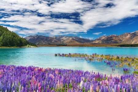 Lake Tekapo, South Island, New Zealand Фото со стока - 13593783