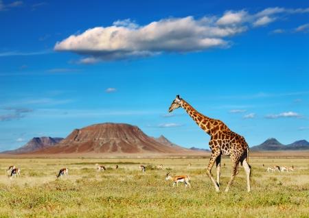 African savanna with giraffe and grazing antelopes Stock Photo
