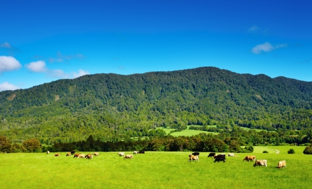 cattle grazing: Landscape with green field and grazing cows Stock Photo
