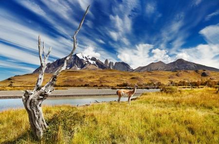 トレス デル パイネ国立公園、パタゴニア、チリ