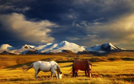 ロシア語、モンゴル語、中国語の寄宿生の接合部 Ukok 高原放牧馬は日没時、 写真素材