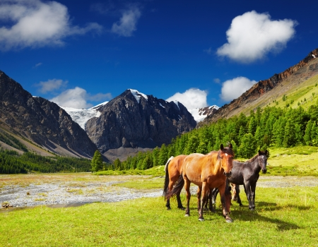Mountain landscape with grazing horses 스톡 콘텐츠