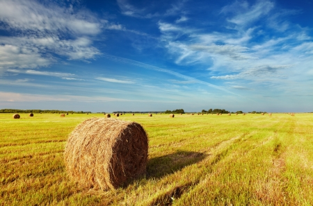 cornfield: Mown field with straw bales