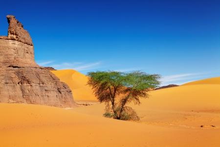 sahara desert: Sand dunes of Sahara Desert, Algeria