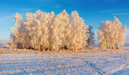 Winter landscape with frosty forest and blue sky photo