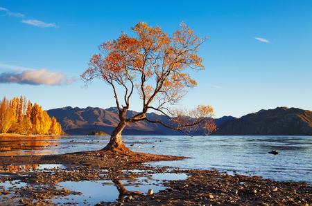 new zealand beach: Autumn landscape, lake Wanaka, New Zealand Stock Photo
