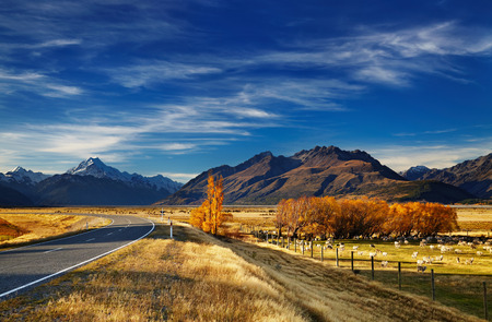 Farmland with grazing sheep and Mount Cook on background, Canterbury, New Zealand photo
