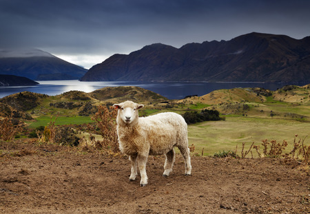 Lake Wanaka, view from mount Roys, New Zealand