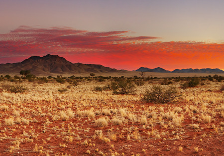 kalahari: Colorful sunset in Kalahari Desert, Namibia