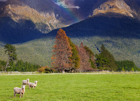 Mountain landscape with forest and grazing sheep, South Island, New Zealand photo