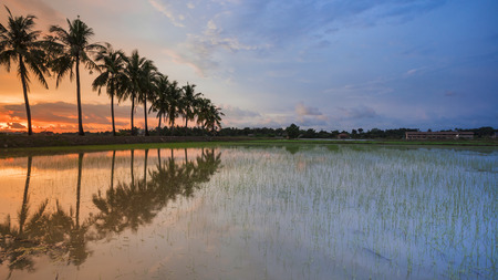 Amazing sunset and Reflection of tropical tree at Permatang Pauh, Pulau Pinang - Malaysia with copy space for text or word