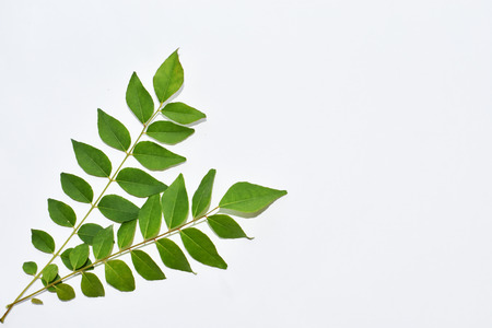 Curry leaves on white background isolated.