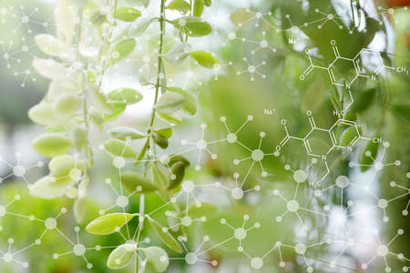 Biology laboratory nature and science, Plants with biochemistry structure on green background. Stock fotó