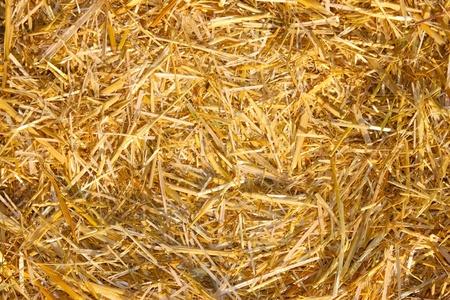 Hay, Straw  photo
