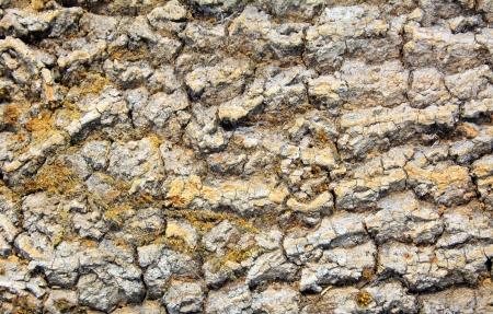 Tree bark texture  photo