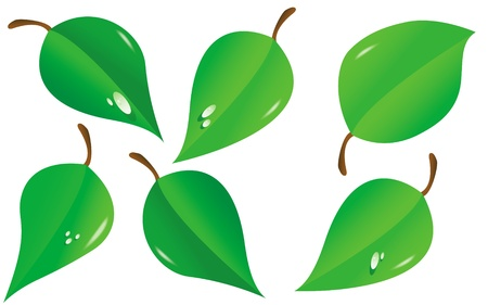 Vector illustration of green leafes  Ilustrace