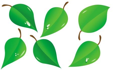 macro leaf: Vector illustration of green leafes  Illustration