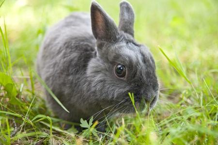 My rabbit named lucky Stock Photo - 12654300