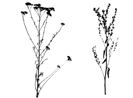 Black spring vectorized flowers on white background Stock Photo - 12988698