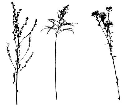 vectorized: Black spring vectorized flowers on white background