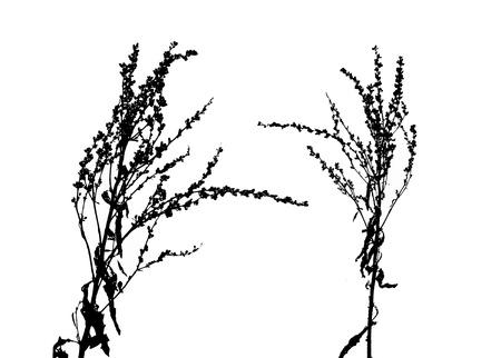 vectorized: Black flores de la primavera vectorizados en el fondo blanco