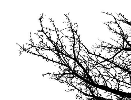 vectorized: Negro primavera �rbol vectorizado sobre fondo blanco