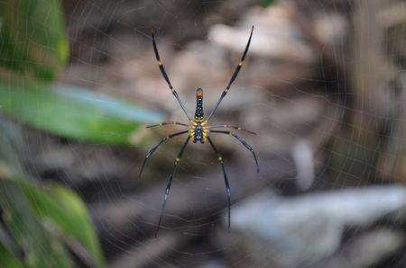 cucurbitina: Spider Like Selfie
