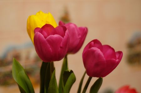 A nice bouquet of spring tulips