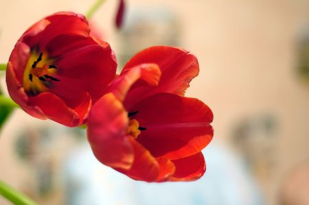 Very nice spring red flowers gladden any girl