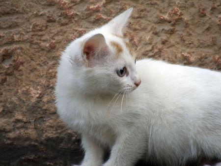 A nice little cat studies the world around