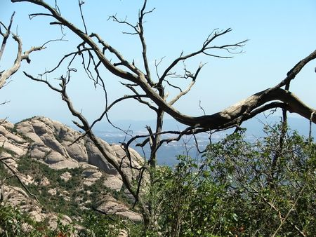 Look at the valley from the Monserrat mountain through branches of a dead tree Stock Photo