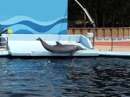 Dolphin has made a great work to gladden people and relaxes  Stock Photo