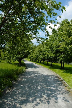 Dirt path in the city park araouned by lime-trees Stock Photo